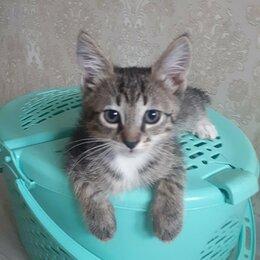Кошки - Полосатые котята мальчики, 0
