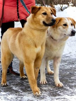 Собаки - Щенок собака, 0