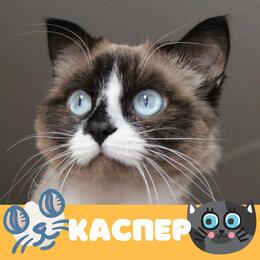 Кошки - Кот Каспер, 0
