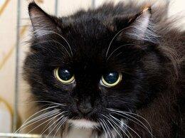 Кошки - Красавица Багира потеряла хвостик в…, 0