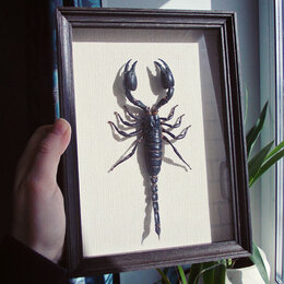 Рога, шкуры, чучела животных - Скорпион в рамке под стеклом, 0