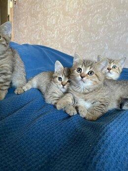 Кошки - Плюшевые котята, 0