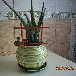 Комнатные растения - Комнатные растения-польза для дома., 0