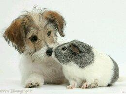 Услуги для животных - Домашняя передержка животных, 0