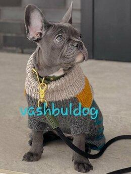 Собаки - Голубые щенки французского бульдога 4 месяца, 0