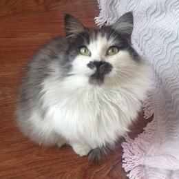 Кошки - кошка в добрые руки, 0