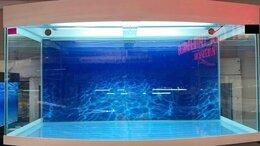 Аквариумы, террариумы, тумбы - Панорамный аквариум 300 литров., 0