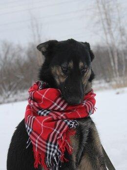 Собаки - Нежный Лютик ищет дом, 0