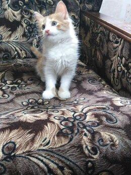 Кошки - Отдам в добрые руки котика, 0