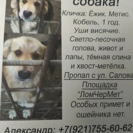 Животные - Пропал пёс Ёжик.Фрунзенский р-он., 0