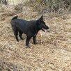 Фрида ищет хозяев по цене даром - Собаки, фото 0