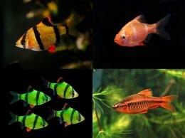 Аквариумные рыбки - Рыбки и растения, 0