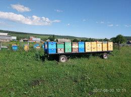 Сельскохозяйственные животные - Пчелопакеты , матки , пчелы , улики ., 0