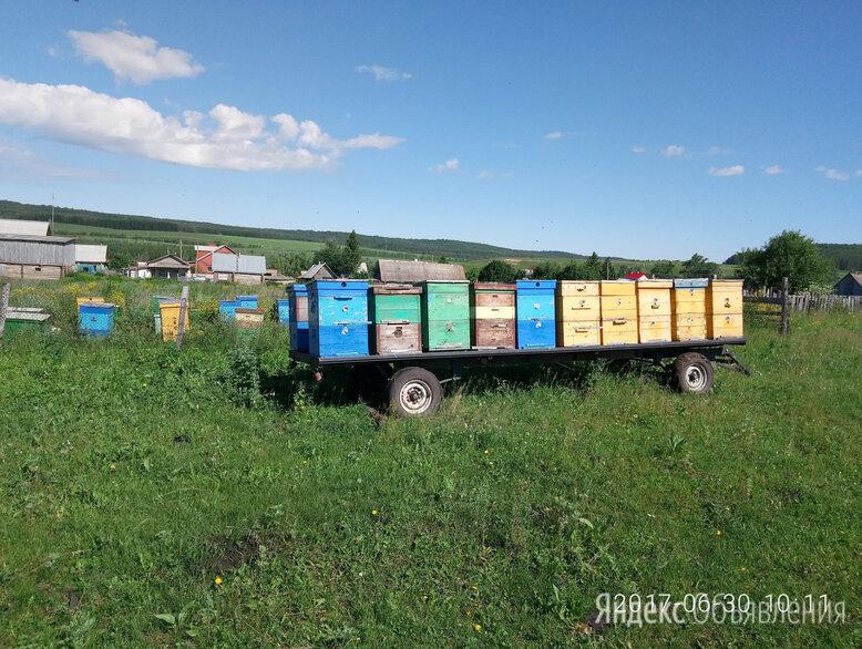Пчелопакеты , матки , пчелы , улики . по цене 4200₽ - Сельскохозяйственные животные и птицы, фото 0