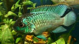 Аквариумные рыбки - Аквариумные рыбки , 0