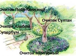 Рассада, саженцы, кустарники, деревья - Клумба № 19,Мини-цветники вокруг деревьев, 0