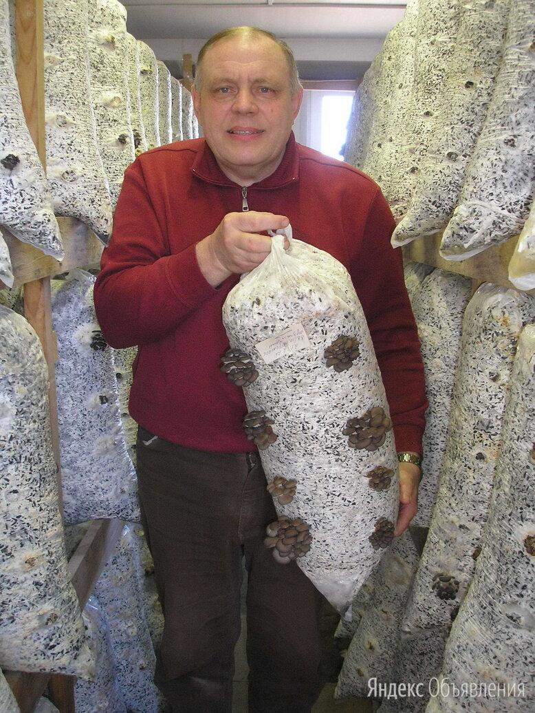 Субстраты грибов (грибные блоки) вешенки, шиитаке, опят по цене 160₽ - Рассада, саженцы, кустарники, деревья, фото 0