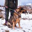Мишутка ищет дом  по цене даром - Собаки, фото 11
