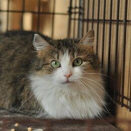 Кошки - Зеленоглазая кошка Антонина, 0