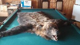 Рога, шкуры, чучела животных - Ковёр из шкуры медведя, 0