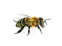 """Картины, постеры, гобелены, панно - Рисунок """"Пчела"""" картина масляная пастель бумага…, 0"""