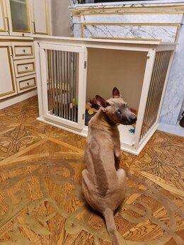 Клетки, вольеры, будки  - Клетка для собак в квартиру , 0