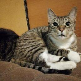 Кошки - Хорошая кошечка Дульсинея 3-5 лет ищет свой дом, 0
