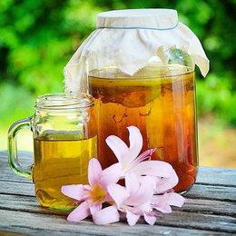 Ингредиенты для приготовления напитков - Чайный гриб «Комбуча»., 0