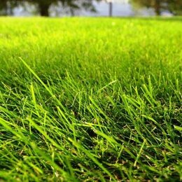 Бытовые услуги - Правильный посев и покос газона, 0