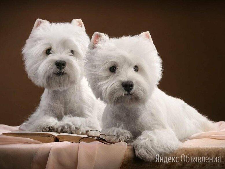 Груминг.  Стрижка, тримминг собак. по цене 900₽ - Груминг и уход, фото 0