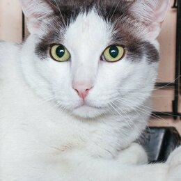 Кошки - Любимый и ненаглядный котик Вильгельм, с которым расстались со слезами на глазах, 0