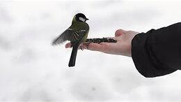 Корма - Семечки для птиц, 0