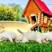 Продам щенков породы лаблодор  по цене 20000₽ - Собаки, фото 0