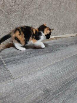 Кошки - Отдам котят в добрые руки , 0