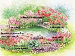 Рассада, саженцы, кустарники, деревья - Цветник у пруда № 23,многолетники в розовых тонах, 0