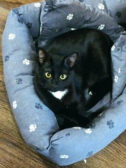 Кошки - Кот  6 месяцев. , 0