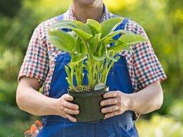 Упаковщик - Упаковщик горшеных растений, 0