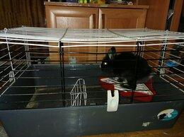Кролики - Кролик карликовый, 0