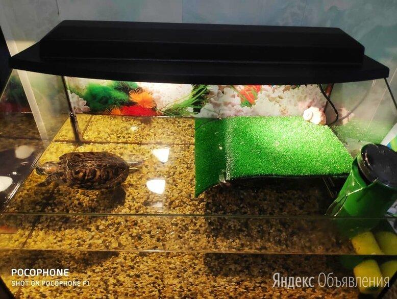 Террариум прямой для черепах 80л по цене 3300₽ - Аквариумы, террариумы, тумбы, фото 0