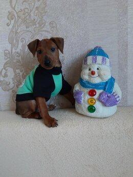 Собаки - Щеночки цвергпинчера, 0