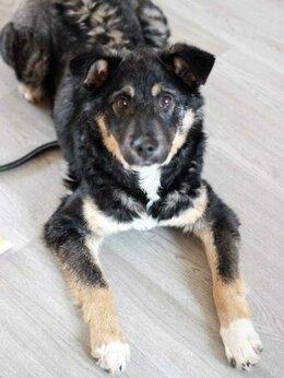 Собаки - Буч - щенок с интересным окрасом веселый и…, 0