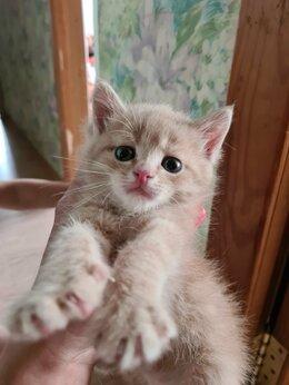 Кошки - Котенок, 0