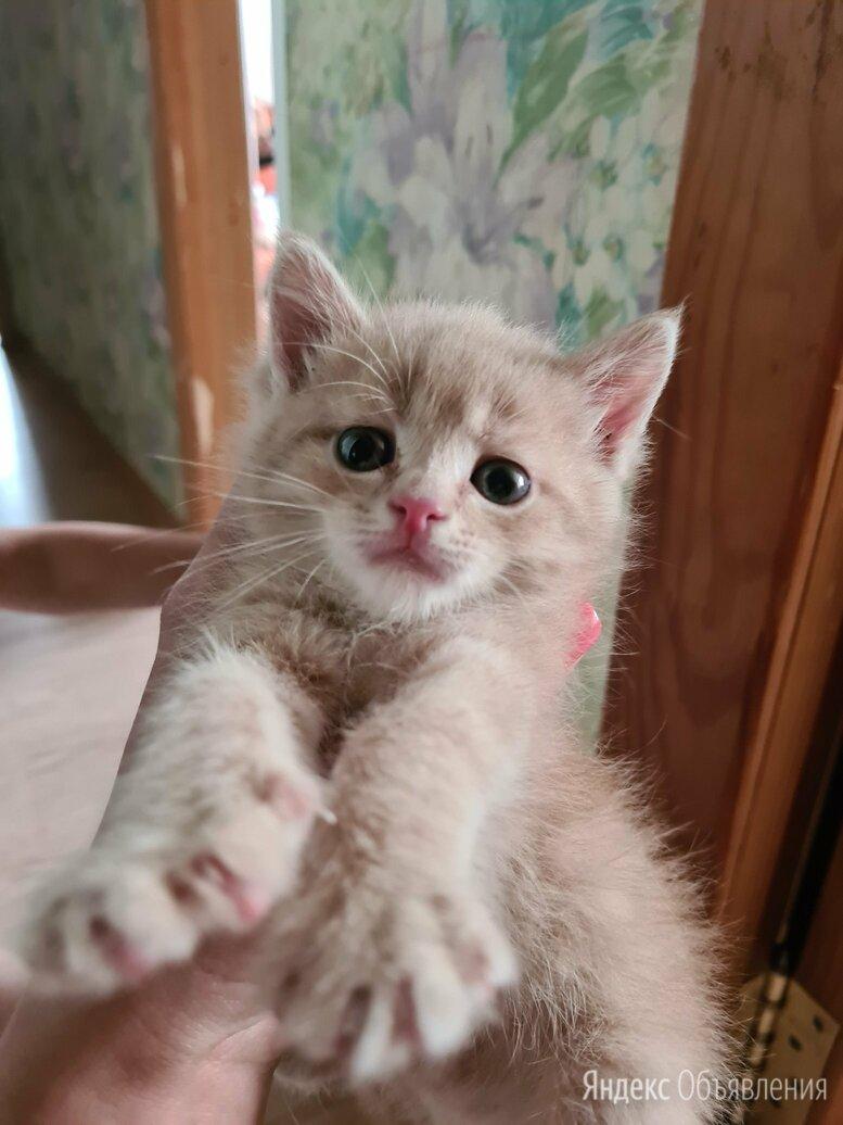 Котенок по цене 1₽ - Кошки, фото 0