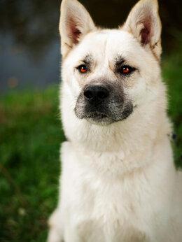 Собаки - Cамурай - суровый снаружи, но добрый внутри, 0