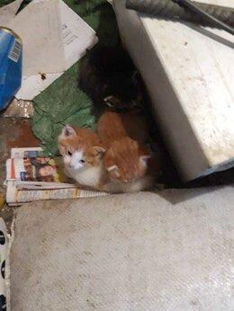 Кошки - Маленькие котята на помойке ищут помощ передержку, 0