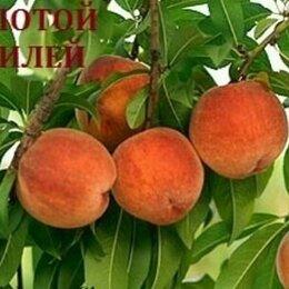 Рассада, саженцы, кустарники, деревья - Саженцы плодовых, ягодных и декоративных культур, 0