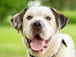 Собаки - Оливер, 10 месяцев, 0