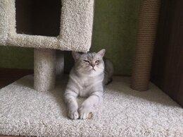 Когтеточки и комплексы  - Комплекс для кошек Вселенная Мурзика, 0