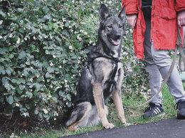 Собаки - Небольшая собачка ищет дом , 0