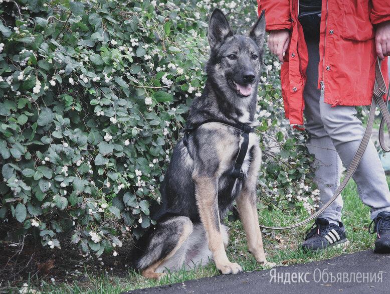 Небольшая собачка ищет дом  по цене даром - Собаки, фото 0